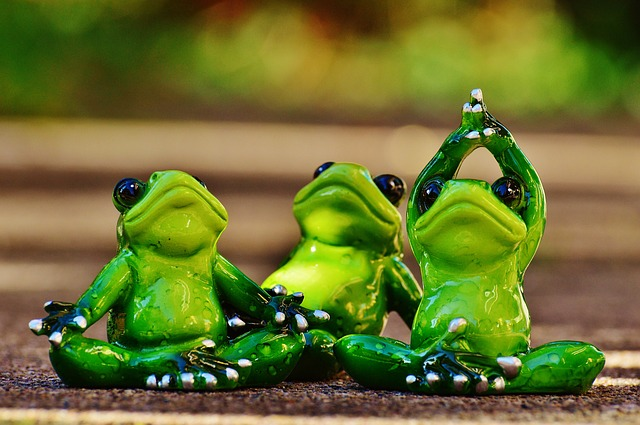 frogs-1030279_640